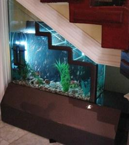 Aquarium under the stairs